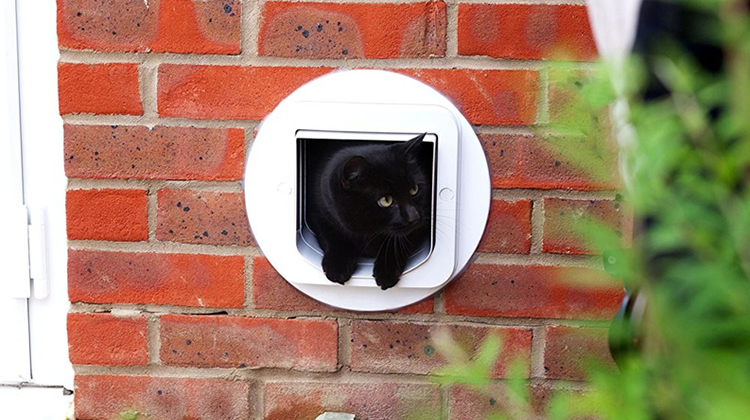 Microchip Cat Flap Wall Installation