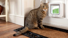 Top 5 Best Microchip Cat Flaps