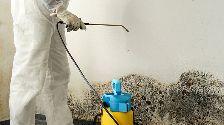How to Stop Mould On Walls